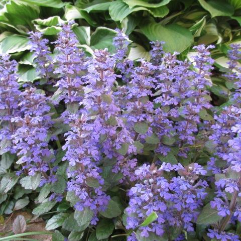 Garden 05 25 14 028