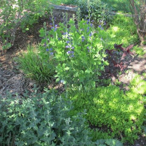 Garden 05 25 14 045