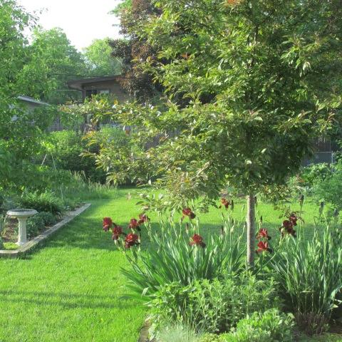 Garden 06 01 14 045