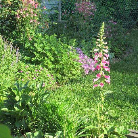 Garden 06 01 14 071