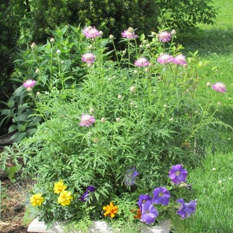 Garden 06 08 14 157