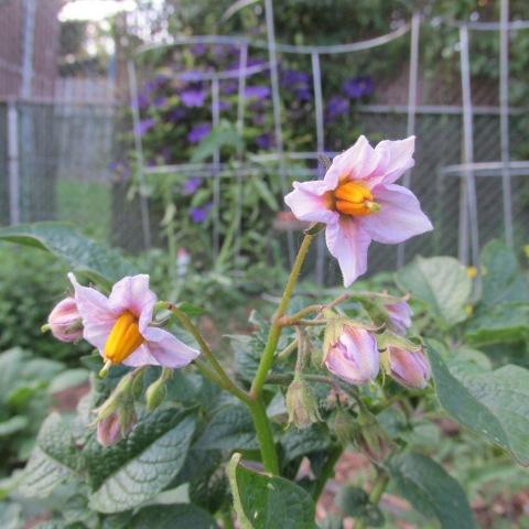 Garden 06 15 14 032