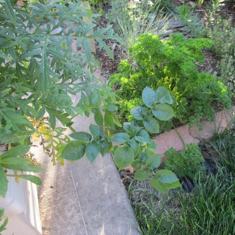 Garden 06 15 14 068