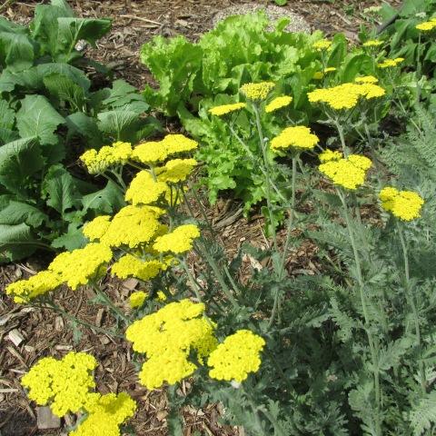 Garden 06 15 14 110