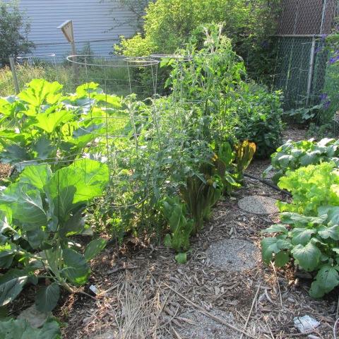 Garden 06 29 14 006