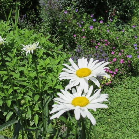 Garden 06 29 14 011