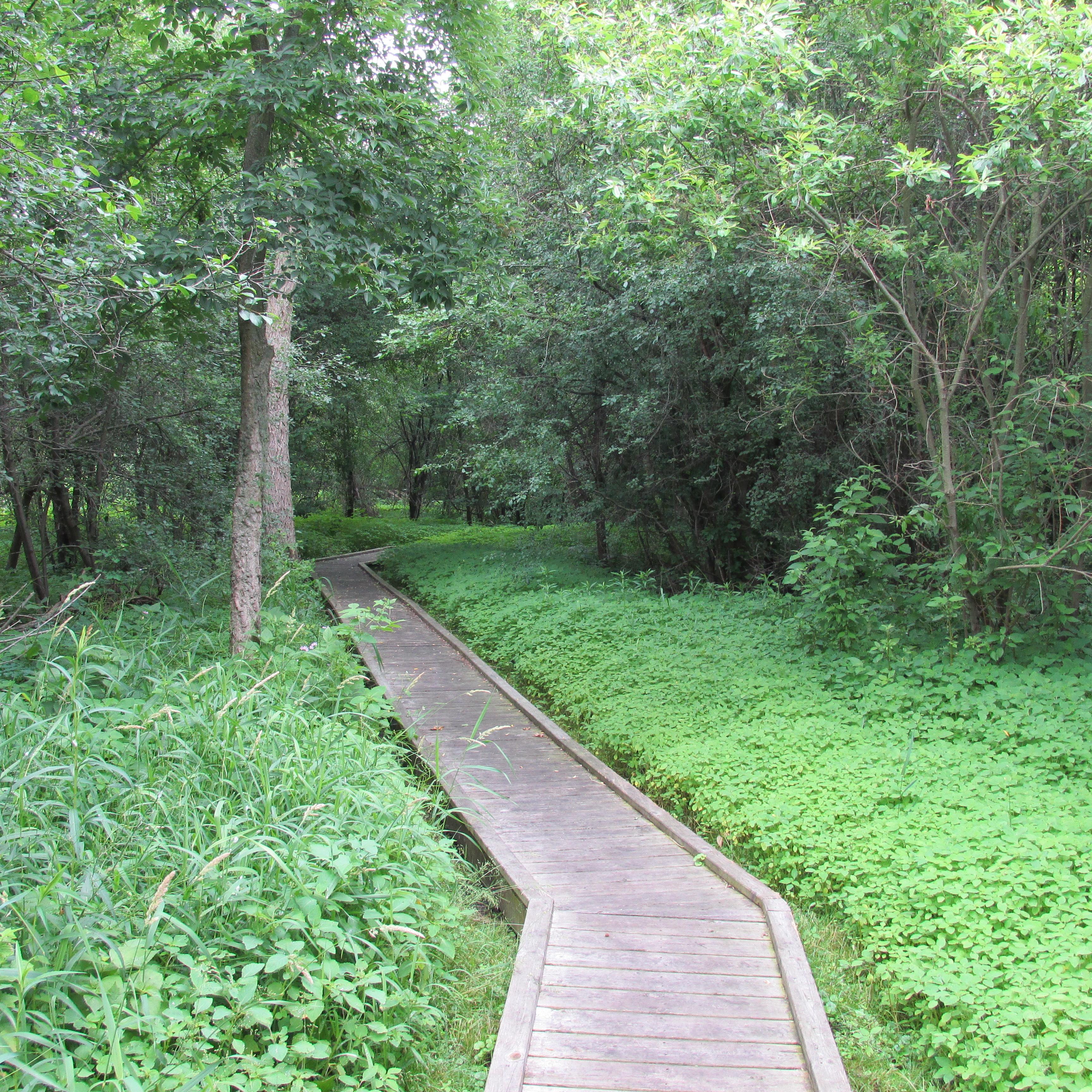 Backyard Nature Preserve :  Park and Kishwauketoe Nature Conservancy ? Little Backyard World
