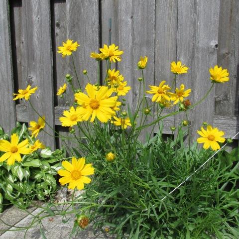 Garden 07 06 14 002