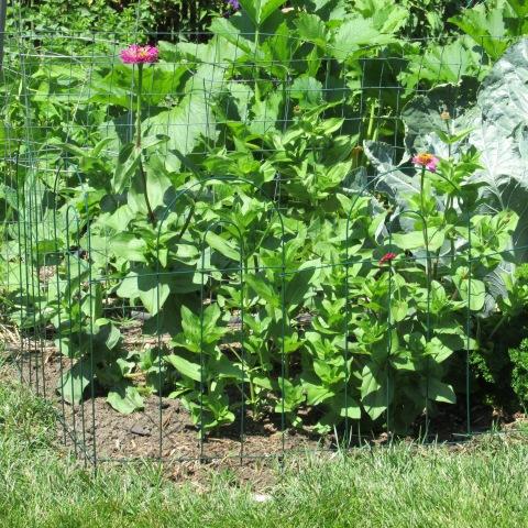 Garden 07 06 14 025