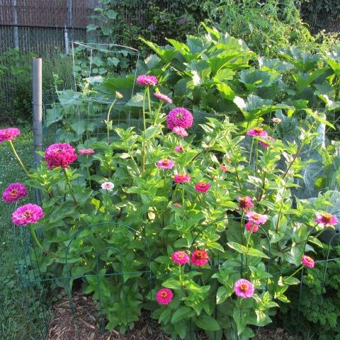 Garden 07 20 14 128