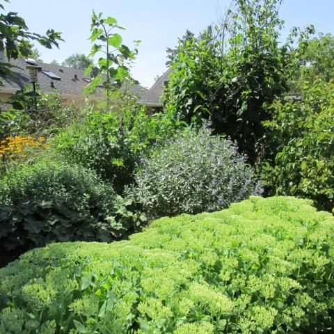Garden 08 16 14 035