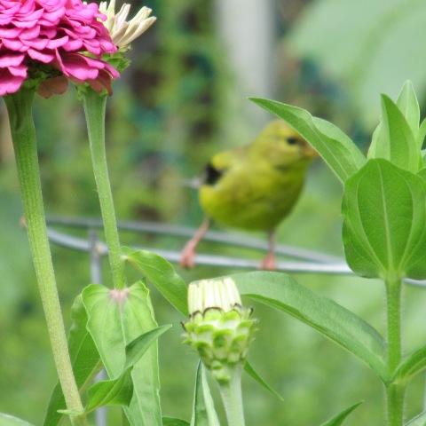 Garden 08 23 14 058