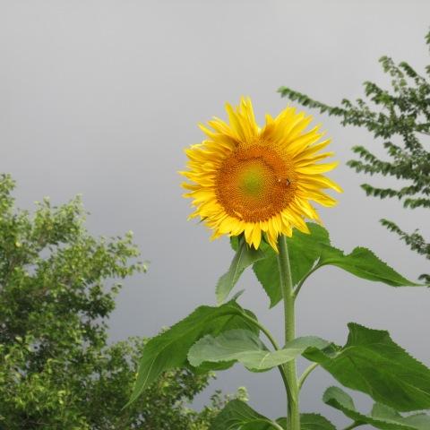 Garden 08 28 14 009