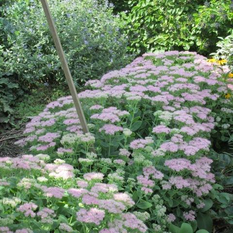Garden 09 06 14 022