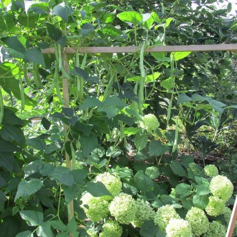 Garden 09 06 14 051