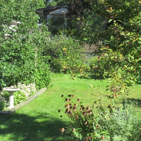 Garden 09 07 14 010