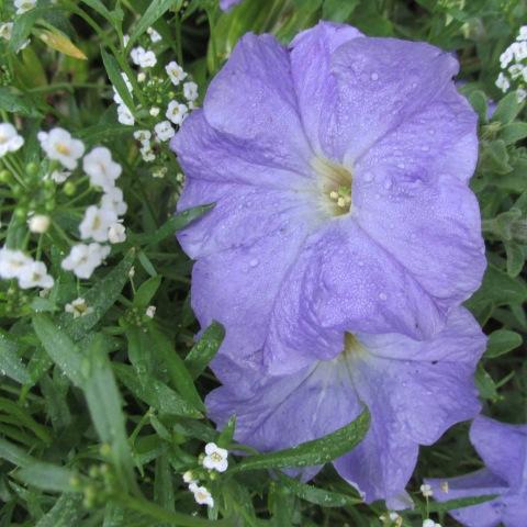 Garden 09 28 14 077