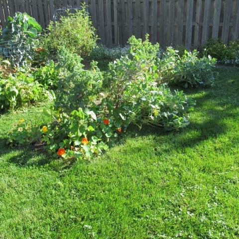 Garden 09 28 14 085