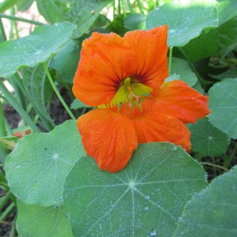 Garden 09 28 14 091