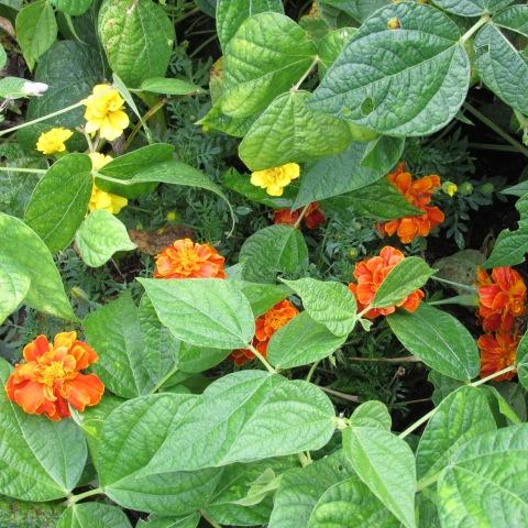 Garden 10 05 14 030