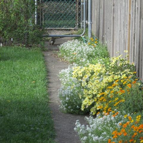Garden 10 05 14 073