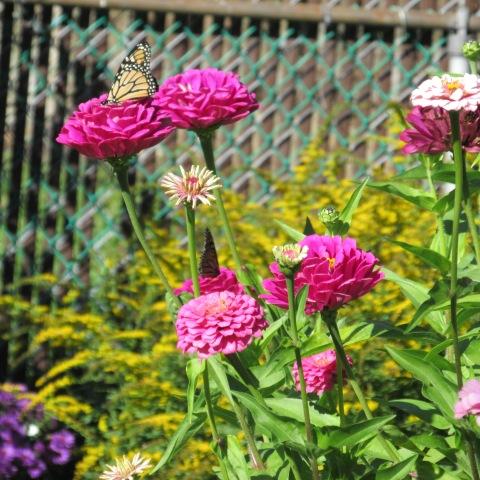 Garden 10 12 14 018