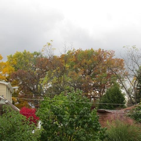 Garden 10 19 14 073