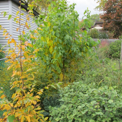 Garden 10 19 14 077