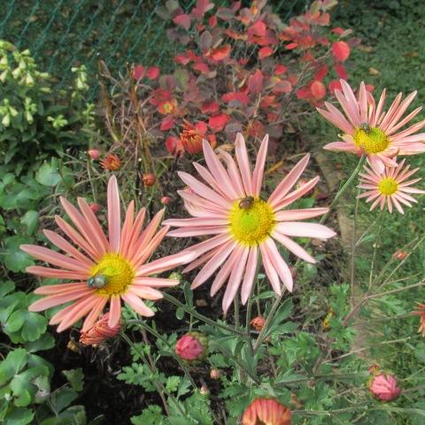 Garden 10 19 14 102