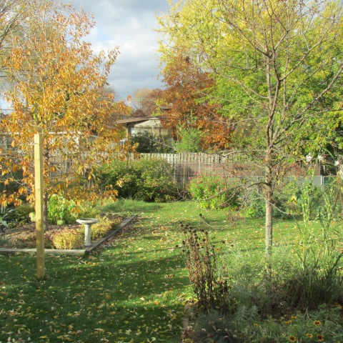 Garden 11 02 14 072