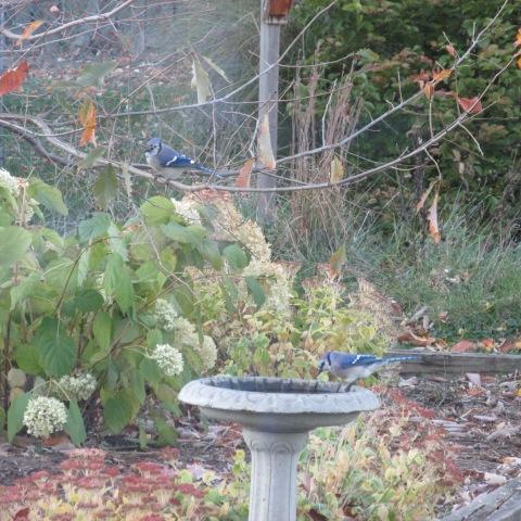 Garden 11 02 14 091