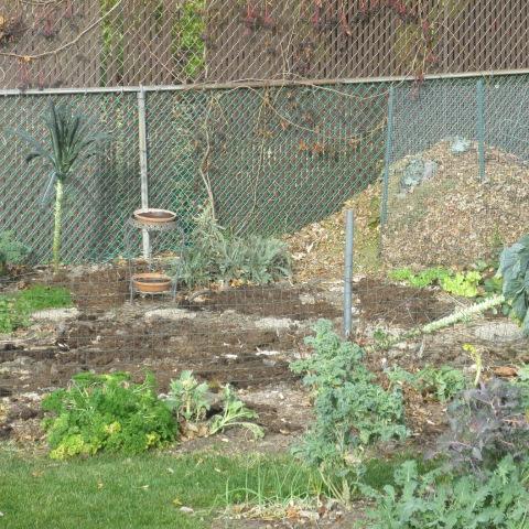 Garden 11 09 14 012