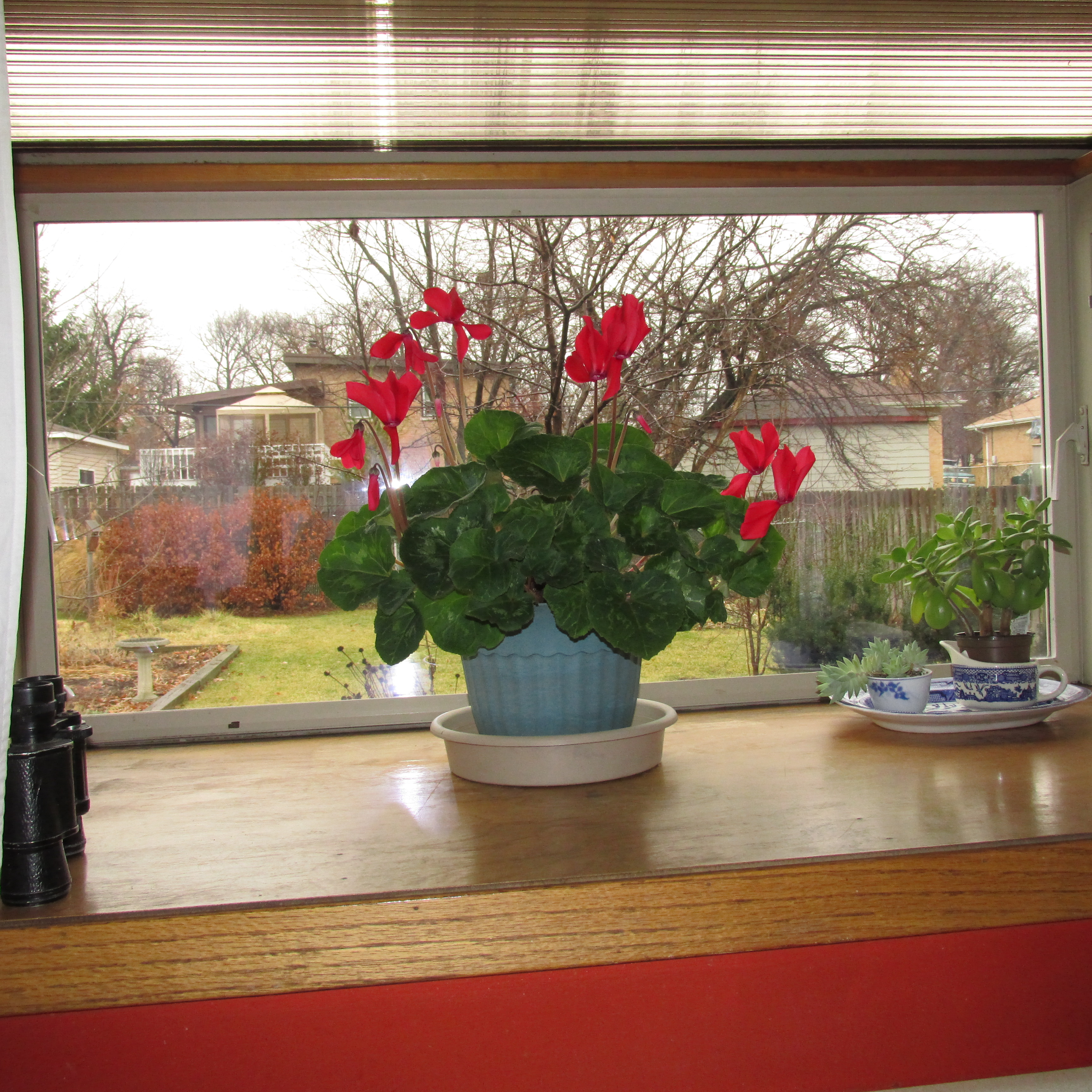 House Plants And A Beaver Lodge