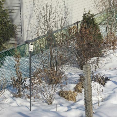 Garden 03 08 15 036