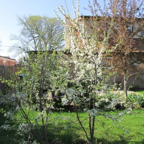 Garden 04 26 15 082