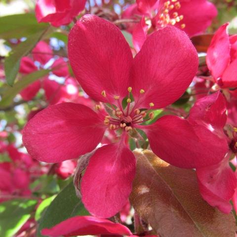 Garden 05 03 15 045