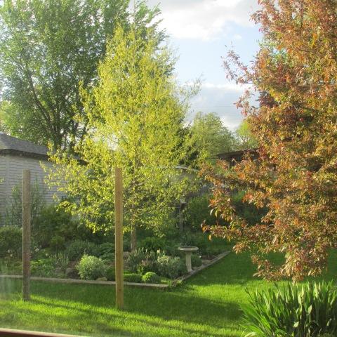 Garden 05 15 15 001