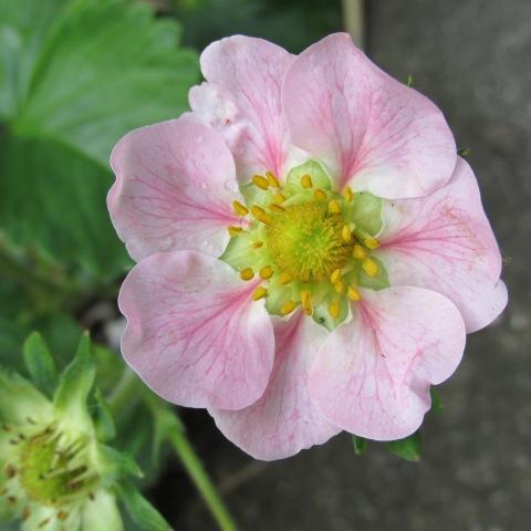 Garden 05 15 15 051