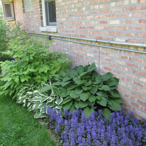 Garden 05 24 15 109