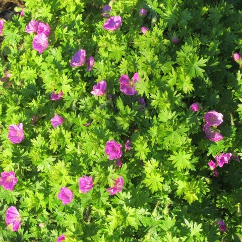 Garden 05 24 15 180