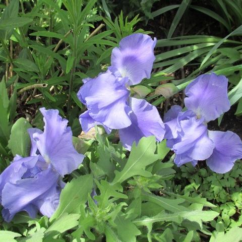 Garden 05 25 15 011
