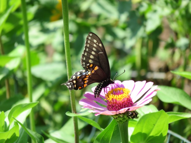 Butterflies, Birds and Blooms