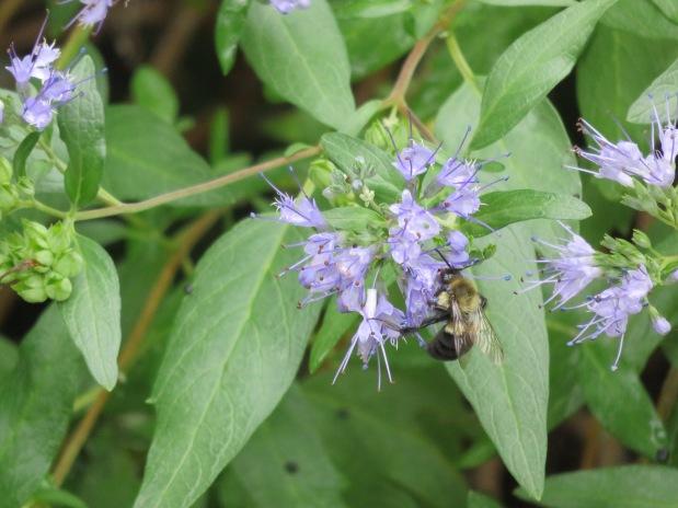 Bees, Fungi, Grasshoppers andHummingbirds