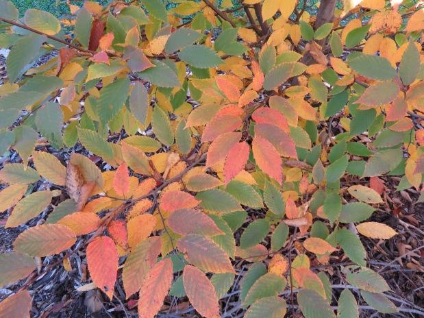 Autumn Colors, Grasses andBirds
