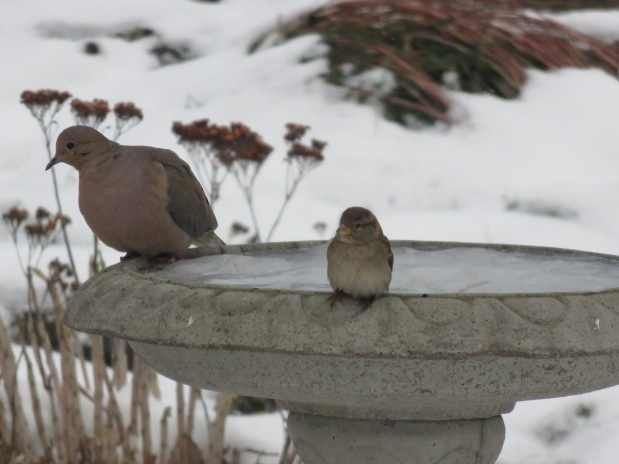 What Happened to the Bird Bath?