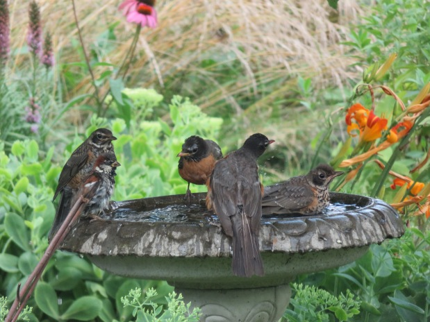 Bird Bath Visitors